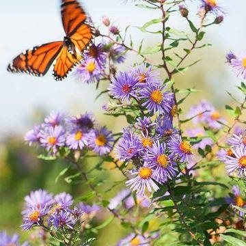 Thumbnail for Summer Gardening Made Easy